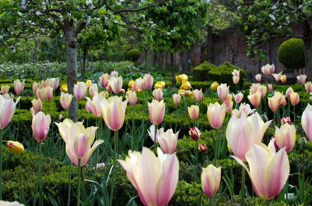 Meilleur engrais de démarrage pour jardinage pelouse comparatif guide achat avis