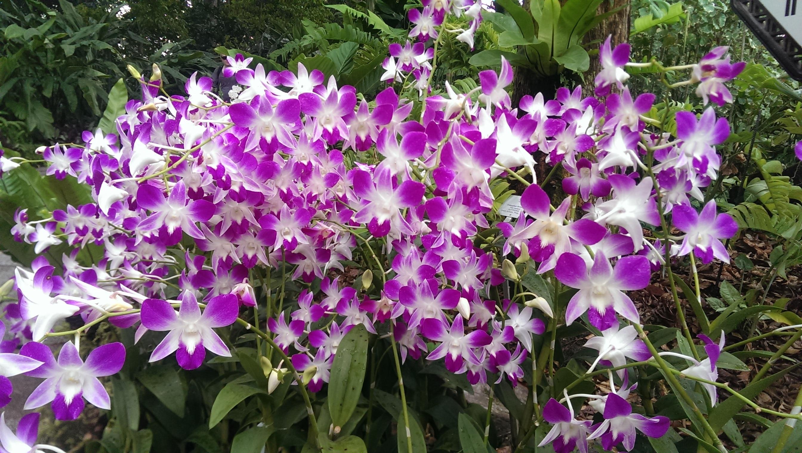 Photo of Meilleur engrais d'orchidée 2020 – Guide d'achat, comparatif et avis