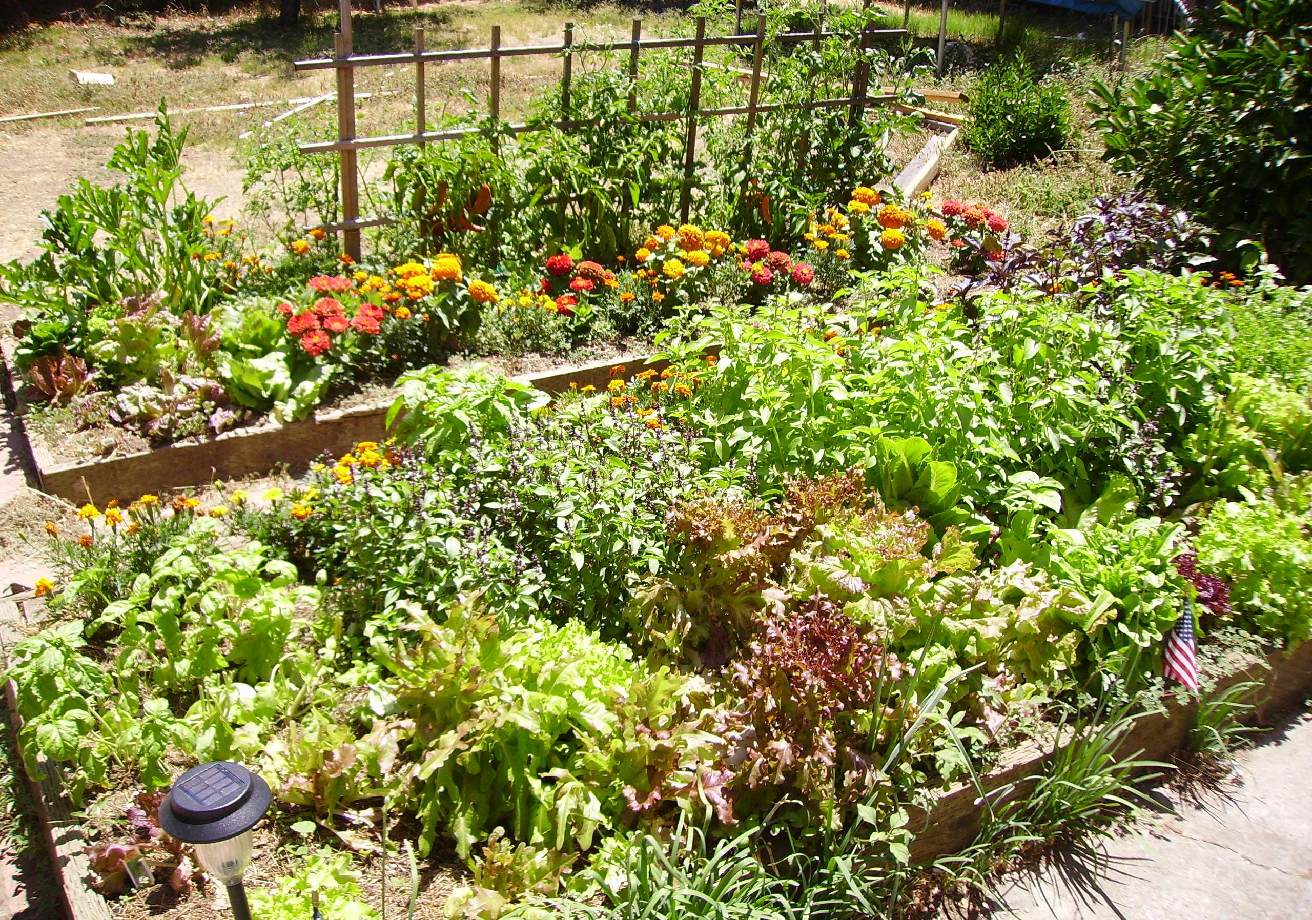 Meilleur engrais pour légumes et jardins guide achat avis et comparatif