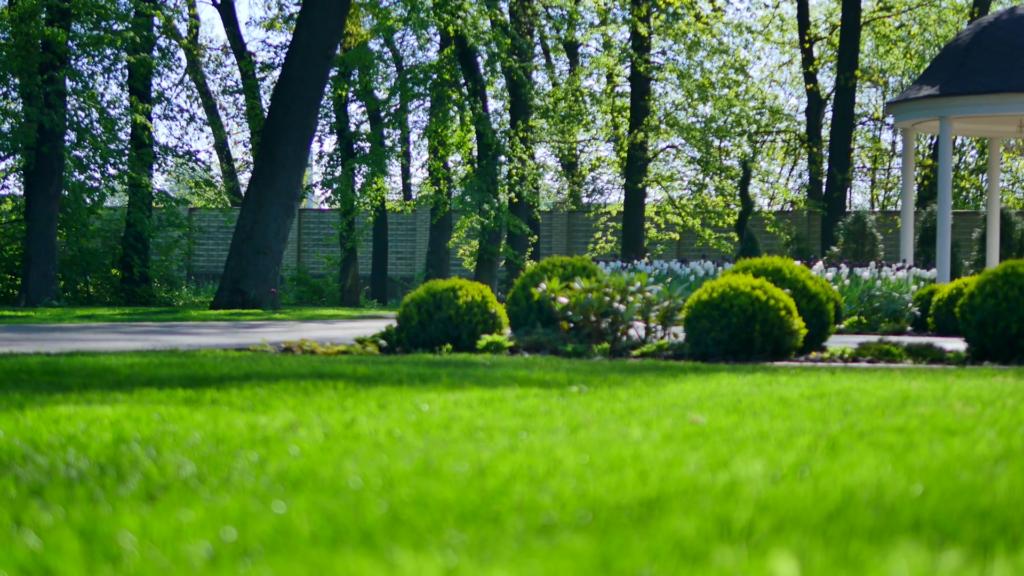 Meilleur engrais pour pelouse guide achat comparatif et avis