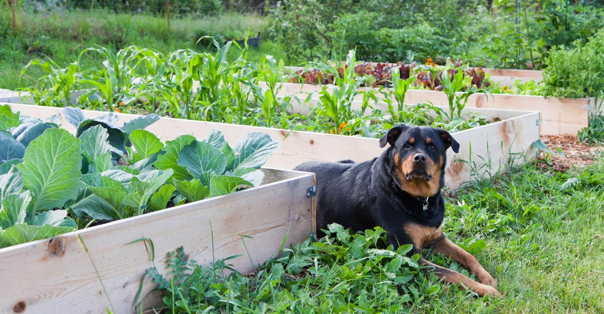 Photo of Meilleur engrais de pelouse sans danger pour les animaux 2019 –Guide d'achat et avis
