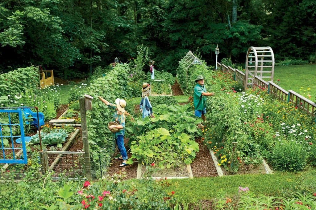 meilleur engrais pour pelouse pas cher comparatif guide achat avis
