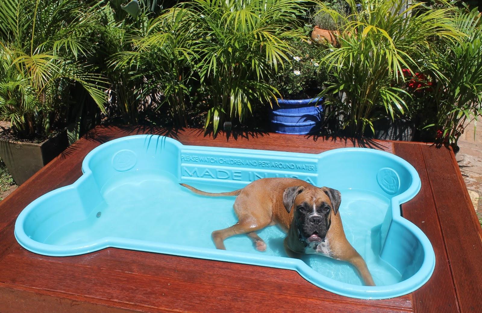 meilleur piscine pour chien comparatif guide achat avis